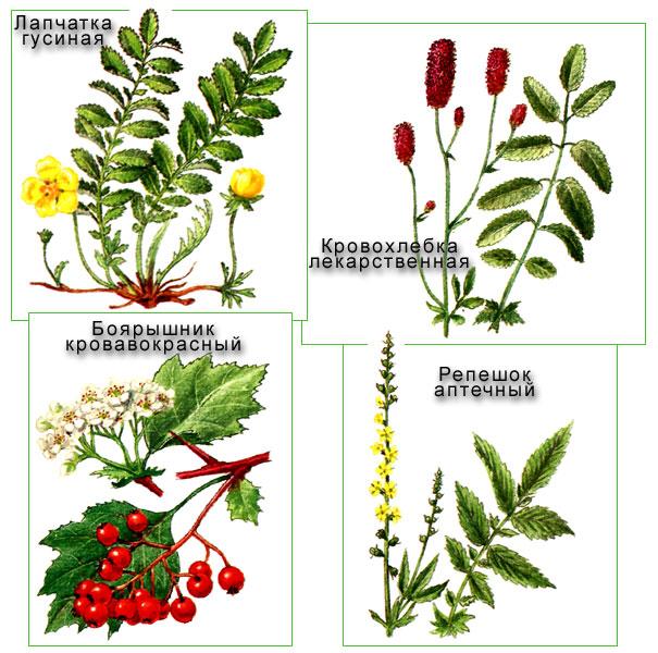 Ботаника растения фото.