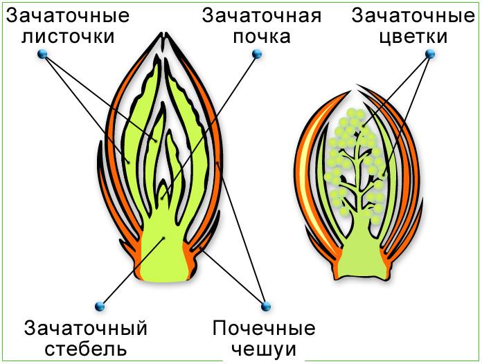 листьев картинки типы