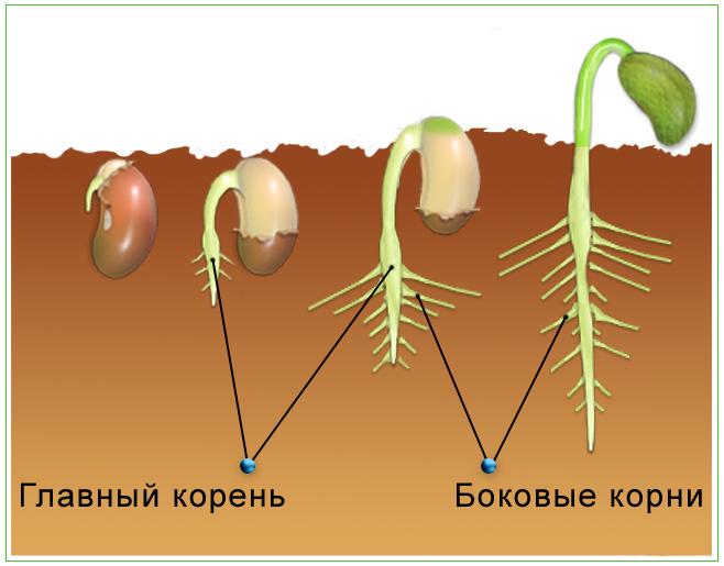 паразиты в заднем проходе человека