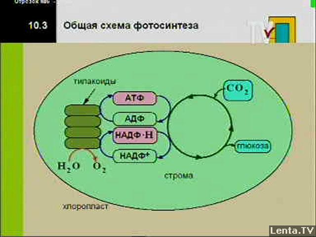 Биология для ученика и учителя
